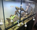 Mon terrarium et bien plus ! 4_anno10
