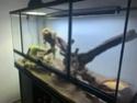 Mon terrarium et bien plus ! 512