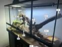 Mon terrarium et bien plus ! 5_anno10