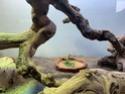 Mon terrarium et bien plus ! Img_3221