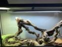 Mon terrarium et bien plus ! Img_3412