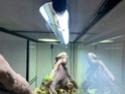Mon terrarium et bien plus ! Img_3418