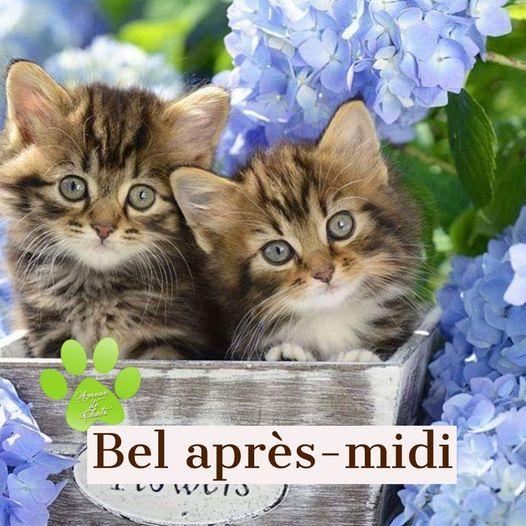 Bonjour ~ Bonsoir  - Page 15 22359911