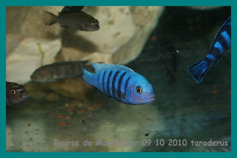 Bourse aux poissons le 10/10/2010 à Montdidier - Page 2 1811