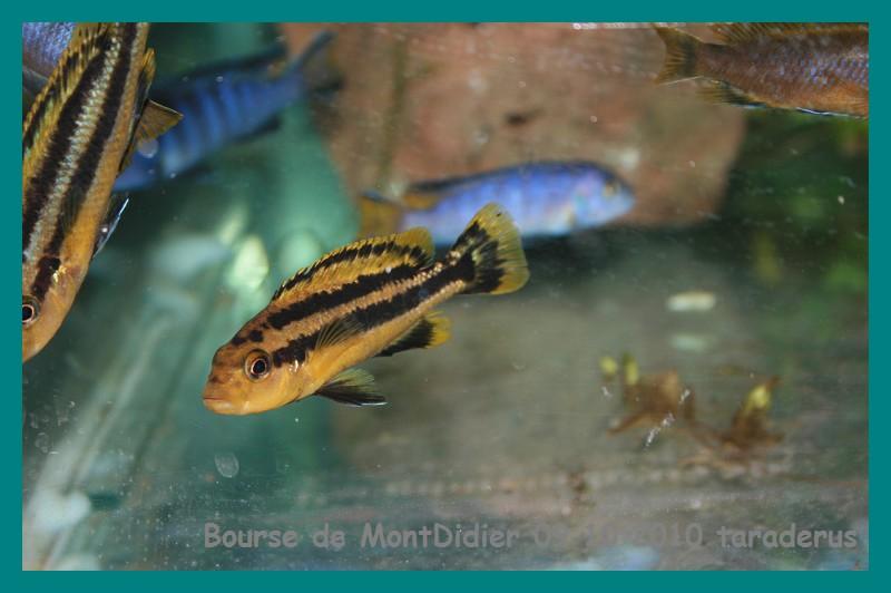 Bourse aux poissons le 10/10/2010 à Montdidier - Page 2 1912