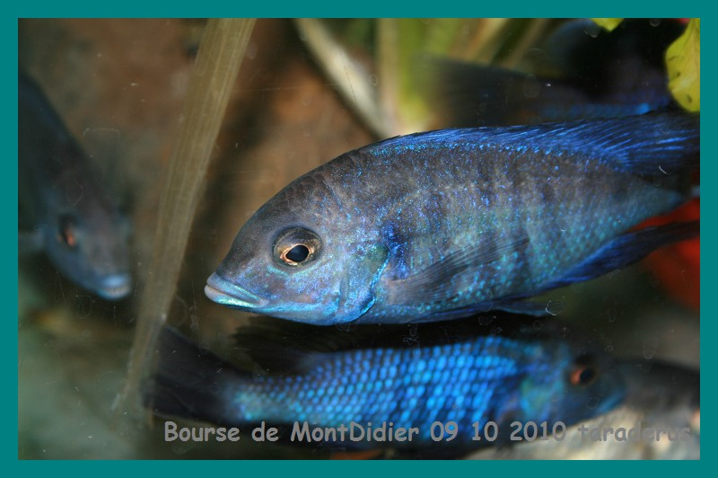 Bourse aux poissons le 10/10/2010 à Montdidier - Page 2 2012