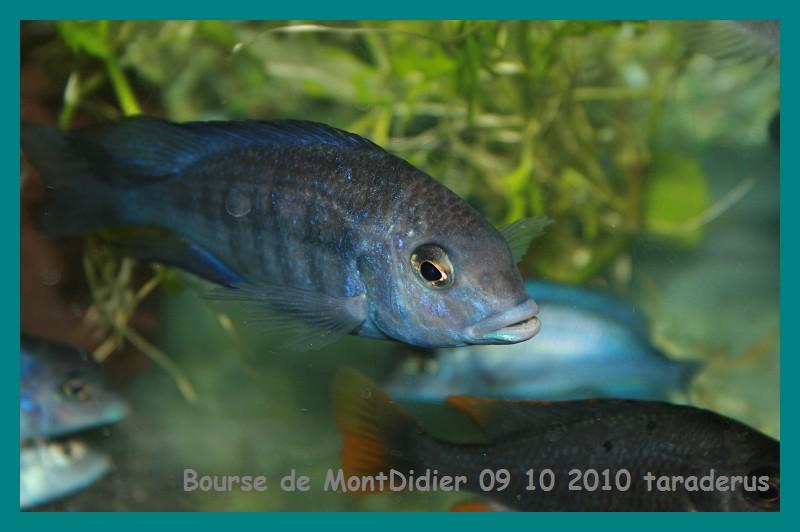 Bourse aux poissons le 10/10/2010 à Montdidier - Page 2 2111