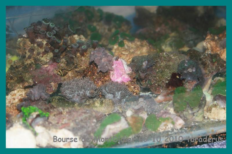 Bourse aux poissons le 10/10/2010 à Montdidier - Page 2 2411