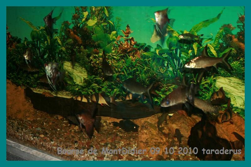 Bourse aux poissons le 10/10/2010 à Montdidier - Page 2 2812