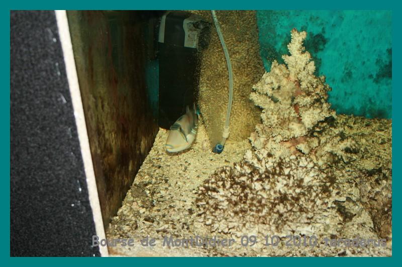 Bourse aux poissons le 10/10/2010 à Montdidier - Page 2 2910