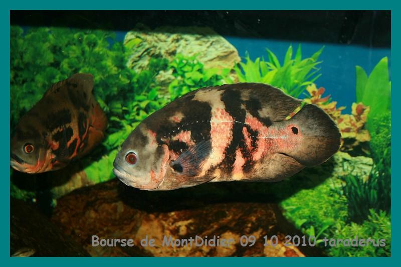 Bourse aux poissons le 10/10/2010 à Montdidier - Page 2 3011