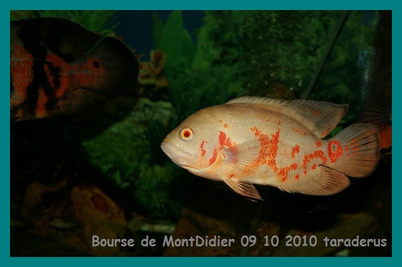 Bourse aux poissons le 10/10/2010 à Montdidier - Page 2 3111