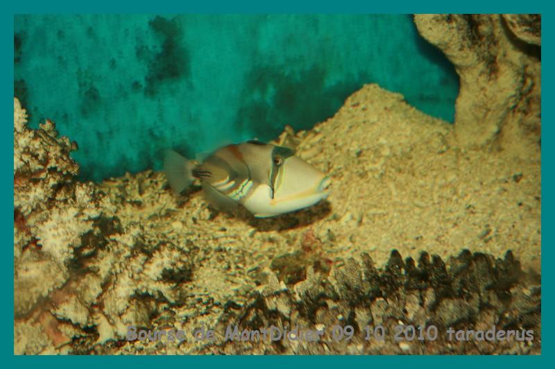 Bourse aux poissons le 10/10/2010 à Montdidier - Page 2 3210