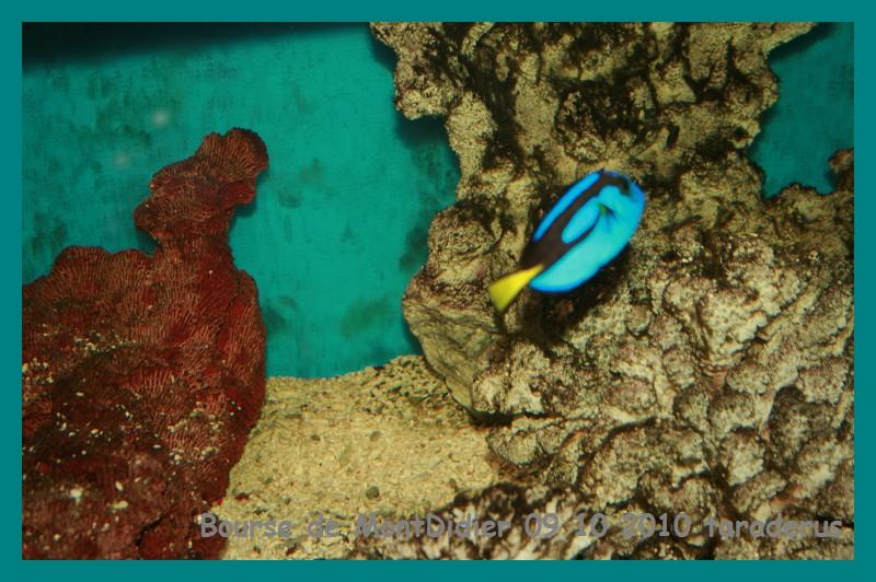 Bourse aux poissons le 10/10/2010 à Montdidier - Page 2 3311