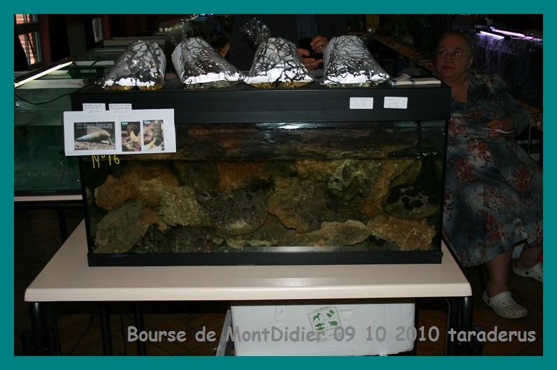 Bourse aux poissons le 10/10/2010 à Montdidier - Page 2 712