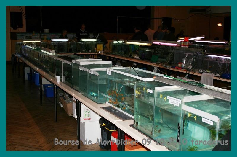Bourse aux poissons le 10/10/2010 à Montdidier - Page 2 812