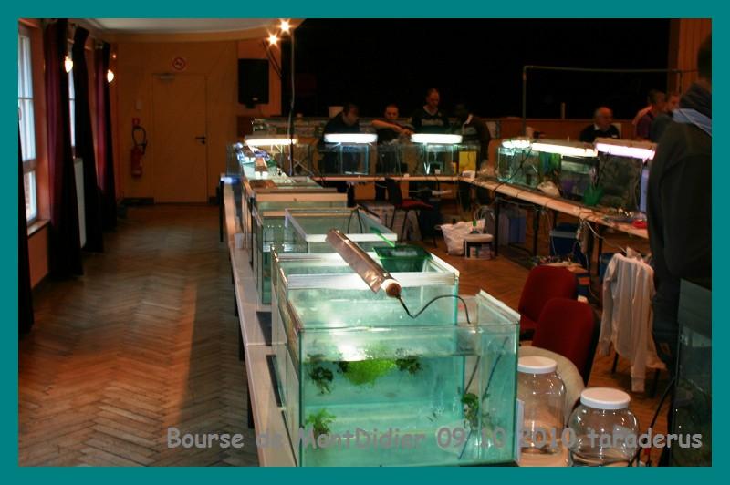 Bourse aux poissons le 10/10/2010 à Montdidier - Page 2 911