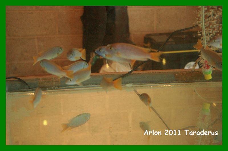 Arlon 2011( le 08/05/2011) Arlon_16