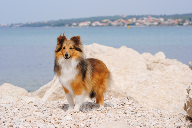 Zadar - Croatie 30 avril et 1er mai 2011   Dsc_1028