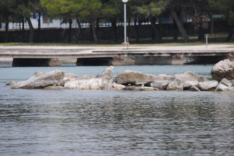 Zadar - Croatie 30 avril et 1er mai 2011   Dsc_1113