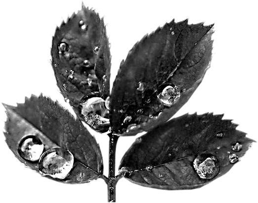 Défis masques feuilles d'automne Feuill10