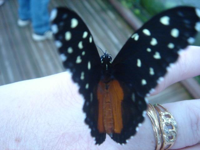 Papillons Dsc03114