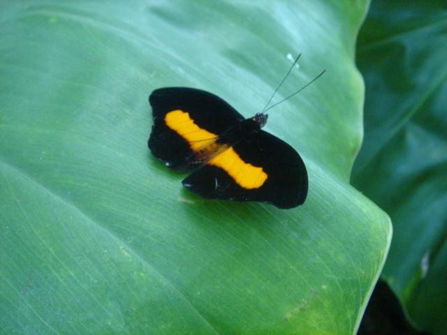 Papillons Dsc03120