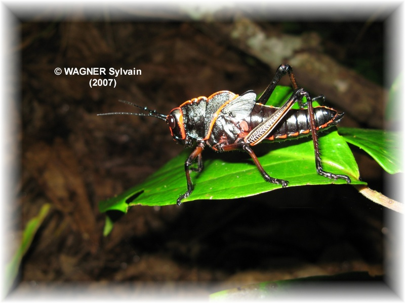 "Hexapodes divers ""Costa Rica"" Crique10"