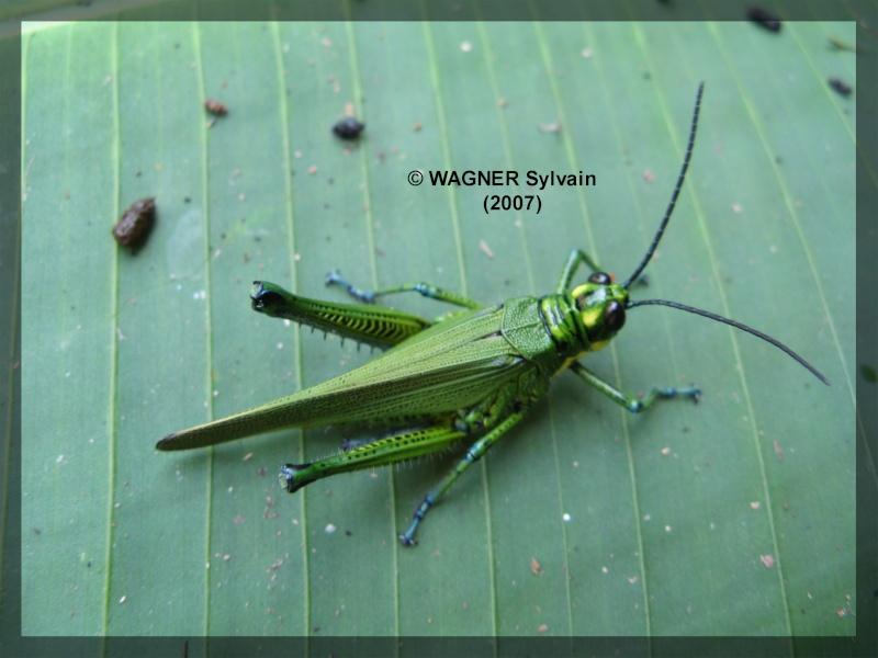 "Hexapodes divers ""Costa Rica"" Crique12"