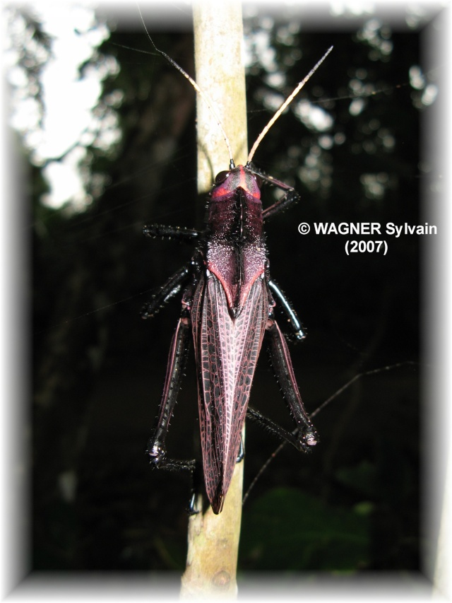 "Hexapodes divers ""Costa Rica"" Crique13"