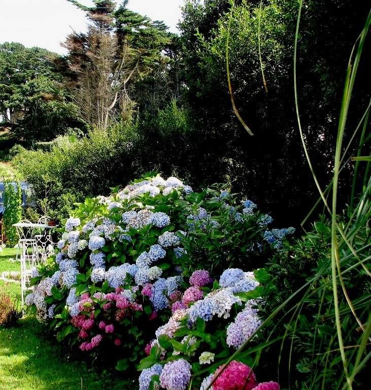 Fleurs ... tout simplement Jardin10