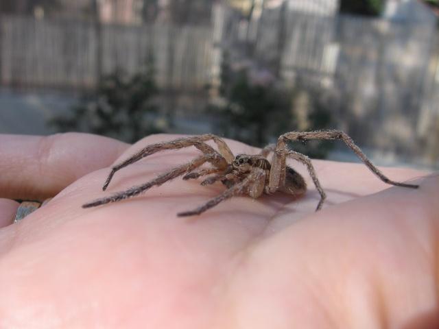 Araignée Img_0029