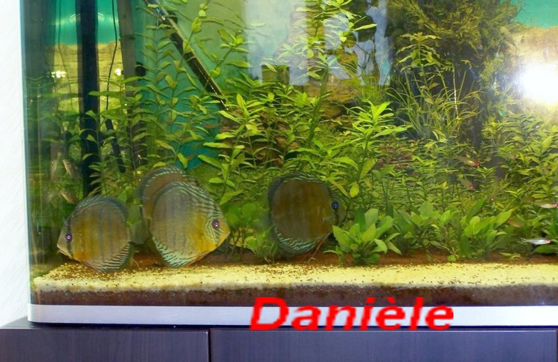mes sauvages Discus13