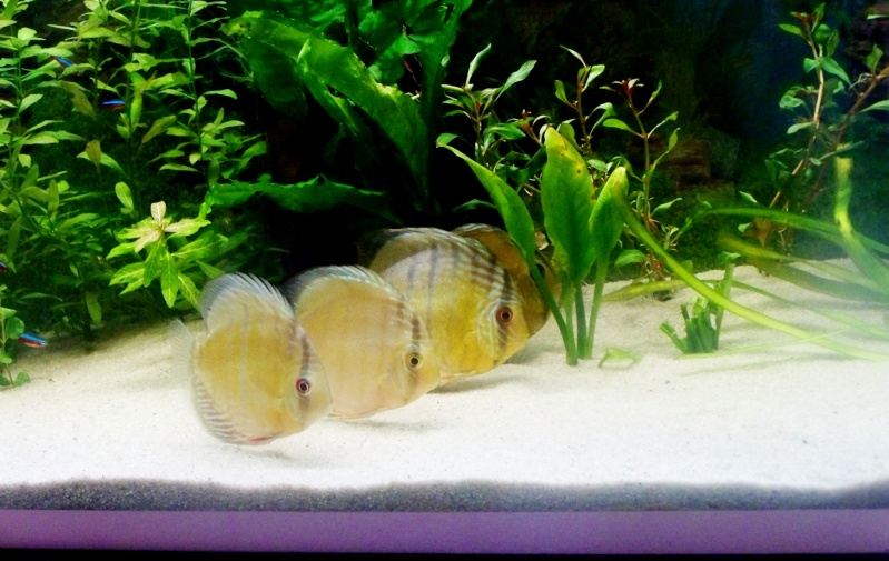 mes sauvages Discus14