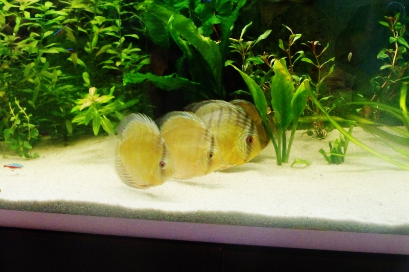 mes sauvages Discus15
