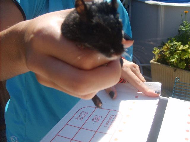 a adopter 15 gerbilles Sd532813