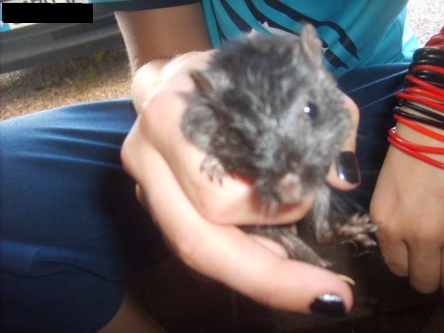 a adopter 15 gerbilles Sd532818