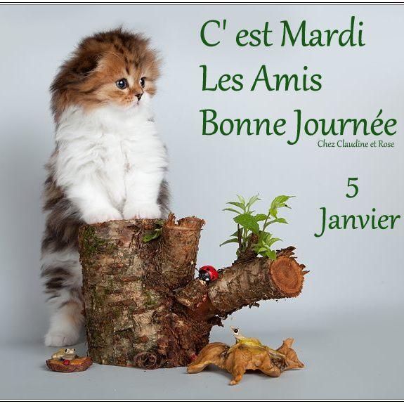 Ici on se dit bonjour  - Page 25 13604010