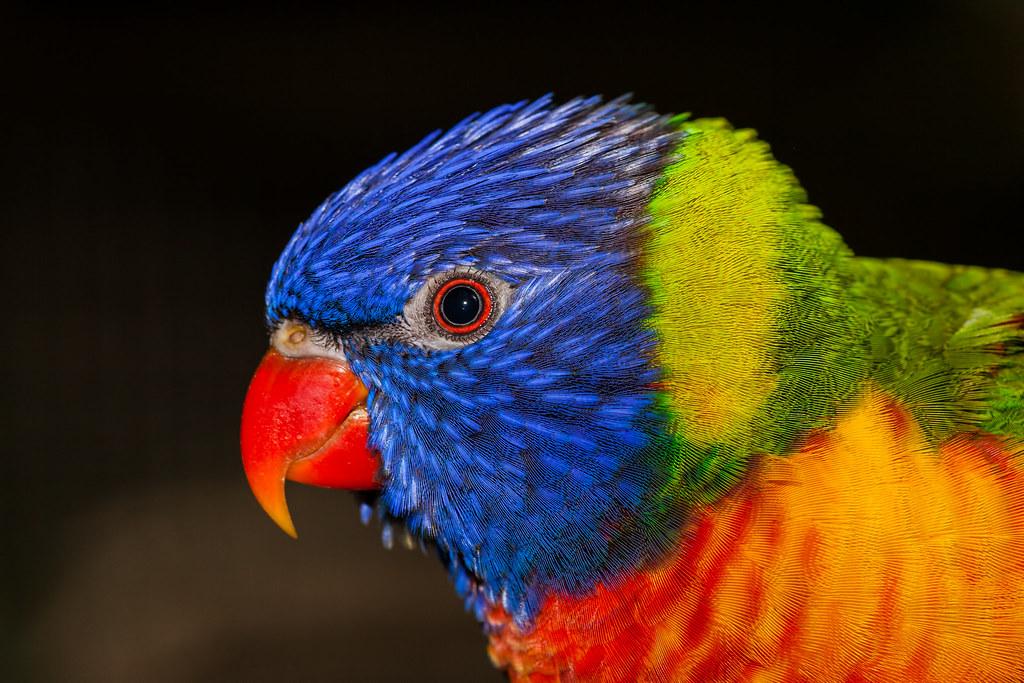 Jeu du multicolore - Page 6 82933810