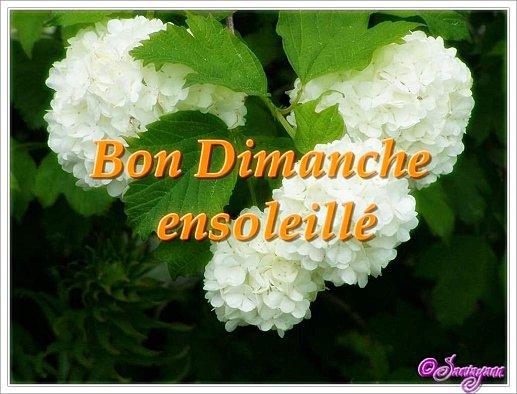 Ici on se dit bonjour  - Page 38 Bon-di11