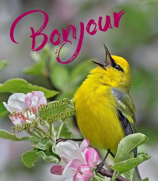 Ici on se dit bonjour  - Page 40 Bonjou17