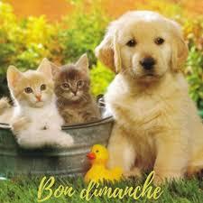Bonjour - Page 2 Images41