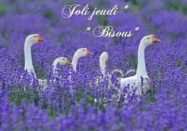 Bonjour - Page 2 Images46