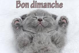 Bonjour - Page 9 Images77