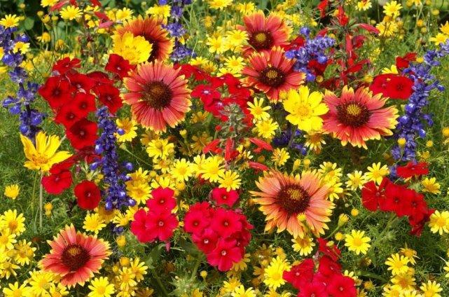 Jeu du multicolore - Page 3 Nature12
