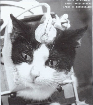 Les animaux spationautes Untitl58