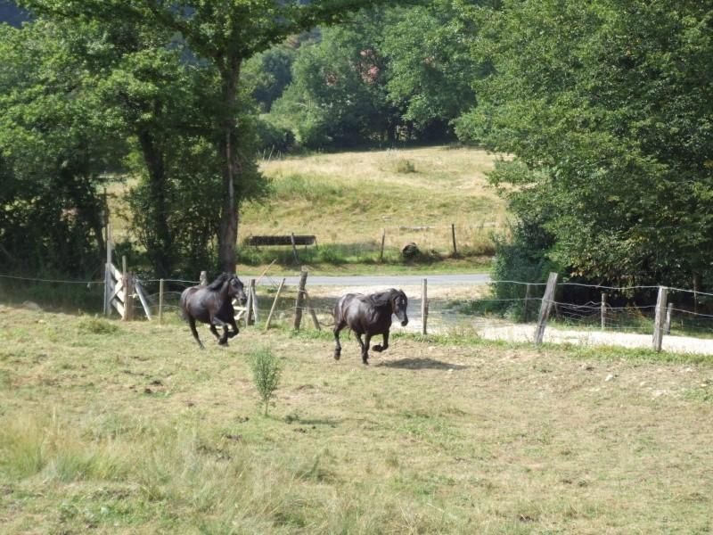 Novice dans le monde du cheval, vos avis m'intéresse ! 2006_012