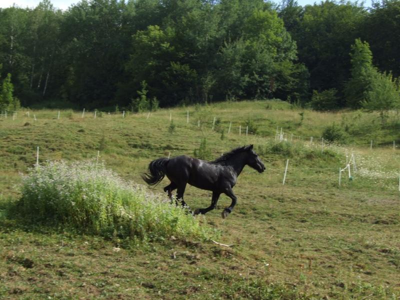 Novice dans le monde du cheval, vos avis m'intéresse ! 2006_013