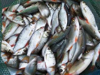 Une petite partie de pêche de 2H30 Ma_pre29