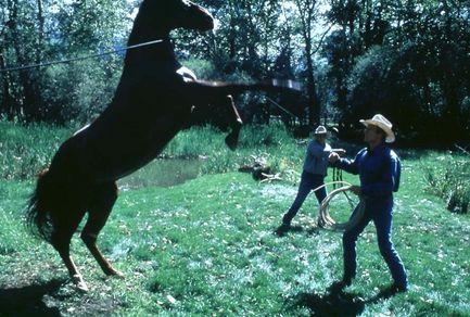 L'Homme qui murmurait a l'oreille des chevaux Cheval10